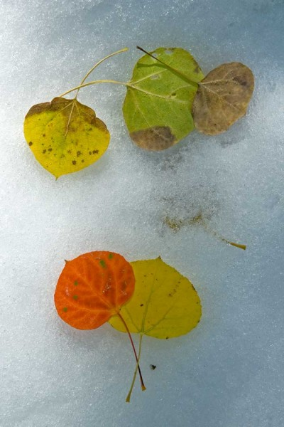 W-Leaves-On-Ice