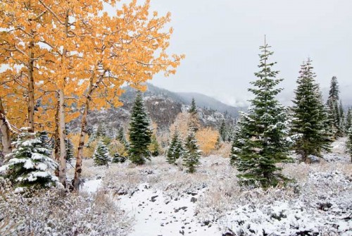 W-Aspen-Firs-Snow