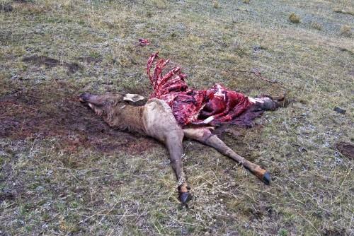 Wolf Kill lite