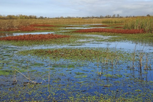 Central Valley Wetland Lite